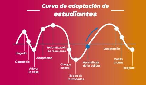 curva de adaptación estu